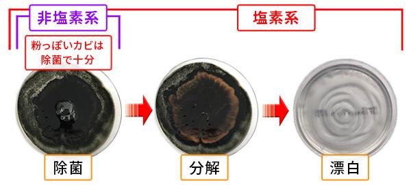 カビ取り剤の除菌、分解、漂白の違い