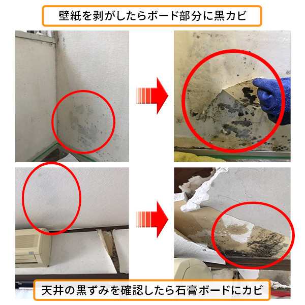 壁紙を剝がしたら、その裏に真っ黒なカビが繁殖していた。