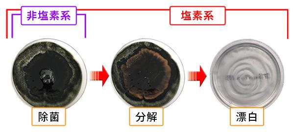 カビ取り剤の除菌、分解、漂白のしくみ